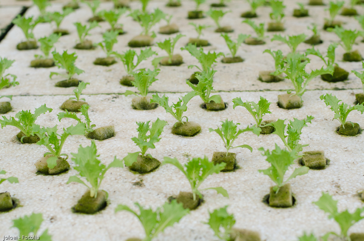 水耕栽培用スポンジ、スポンジ培地の加工販売